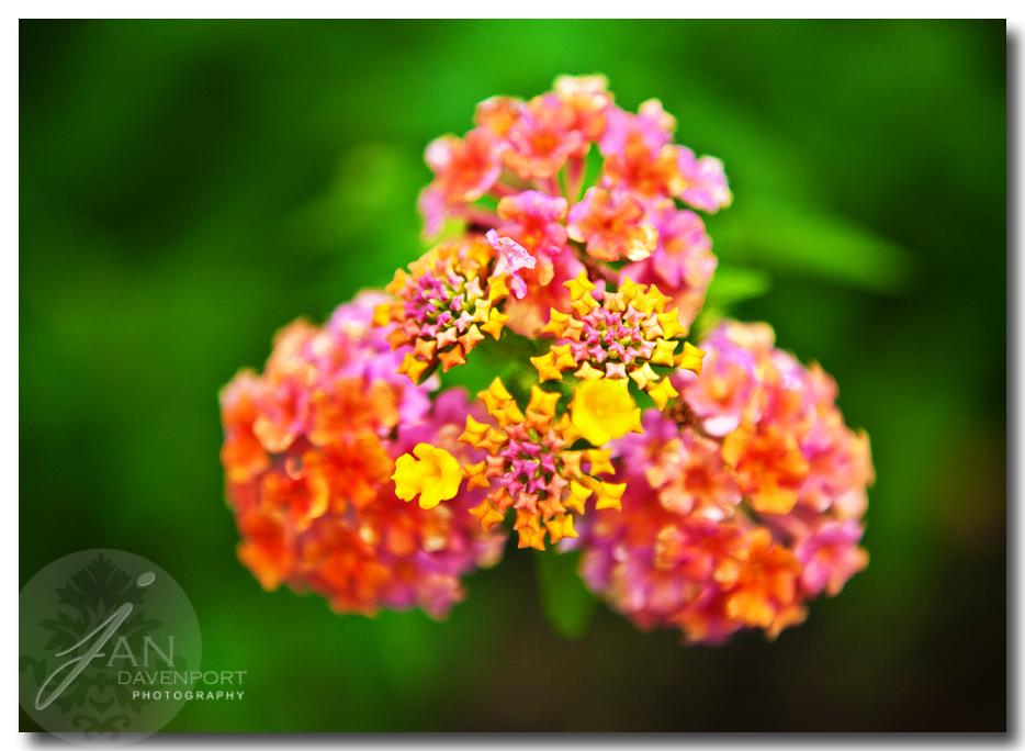 Flowerseditedweb900