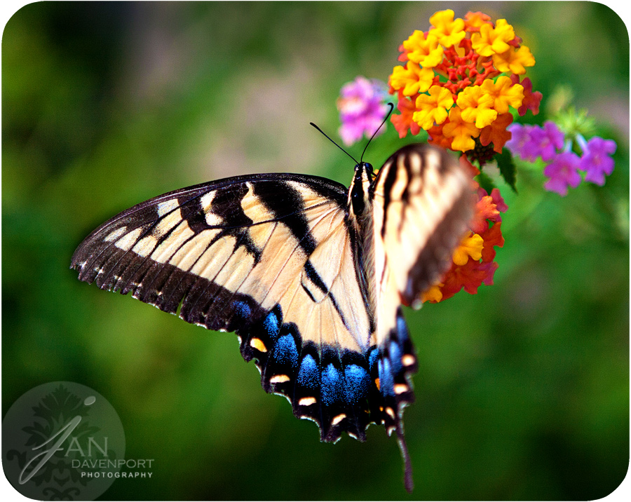 Butterfly2web900